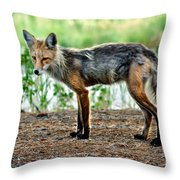 Beautiful Red Fox Throw Pillow
