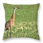 Beautiful Sandhill Crane Throw Pillow