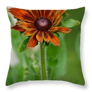 Beautiful Shades Of Brown  Throw Pillow