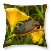 Beautiful Slug Throw Pillow