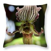 Beautiful Striped Lady Slipper Throw Pillow