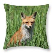 Beautiful Vixen Throw Pillow