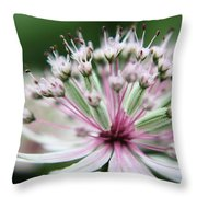 Beautiful White And Pink Buds Throw Pillow