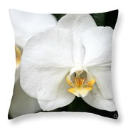 Beautiful White Phanaenopsis Orchids Throw Pillow
