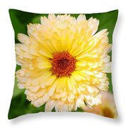 Beautiful Yellow Marigold Goldbloom Close Up  Throw Pillow