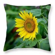 Beautiful Yellow Sunflower In Full Bloom Throw Pillow