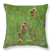 Prickly Histle Beauty Among The Grasses Throw Pillow