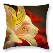 Beauty Beheld Throw Pillow
