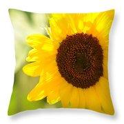 Beauty Beheld - Sunflower Throw Pillow