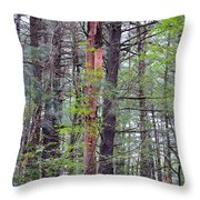 Beauty In Nature 2 Throw Pillow