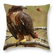 Beauty In Nature Red Tailed Hawk In The Spring  Throw Pillow by Inspired Nature Photography Fine Art Photography