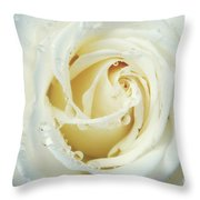 Beauty Of A White Rose Throw Pillow
