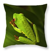 Beauty Of Tree Frogs Costa Rica 6 Throw Pillow