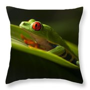 Beauty Of Tree Frogs Costa Rica 7 Throw Pillow