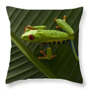 Beauty Of Tree Frogs Costa Rica 8 Throw Pillow