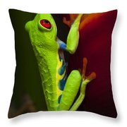 Beauty Of Tree Frogs Costa Rica 9 Throw Pillow