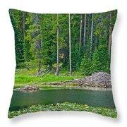 Beaver Dam In Heron Pond In Grand Teton National Park-wyoming Throw Pillow