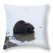 Beaver In The Shallows Throw Pillow