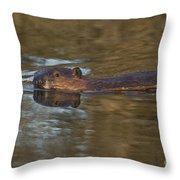 Beaver Swimming Throw Pillow