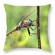 Beaverpond Baskettail Dragonfly Throw Pillow