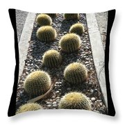 Bed Of Barrel Cacti  Throw Pillow