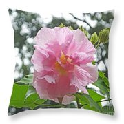Bedazzled By The Light Louisiana Confederate Rose Throw Pillow