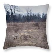 Bedded Whitetail Deer Throw Pillow