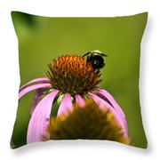 Bee And Echinacea Flower Throw Pillow