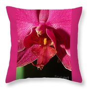 Bee Appeal To Pollinate Throw Pillow