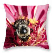 Bee Close Up On Pinkish Red Flower Throw Pillow