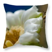 Bee Drinking The Nectar Of Saguaro Cactus Flower Throw Pillow