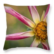 Bee Enjoying A Willie Willie Dahlia Throw Pillow