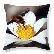 Bee Fly And Bloodroot Throw Pillow
