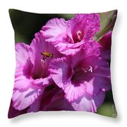 Bee In Pink Gladiolus Throw Pillow