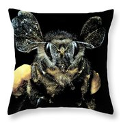 Bee Loaded With Pollen Throw Pillow