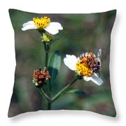 Bee- Nectar Throw Pillow