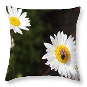 Bee On A Daisy 2 Throw Pillow