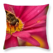 Bee On A Pink Daisy Throw Pillow