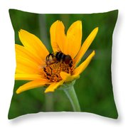 Bee On A Smooth Oxeye Throw Pillow