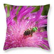 Bee On Corn Flower Throw Pillow