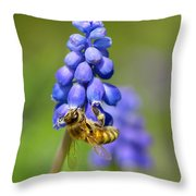 Bee On Grape Hyacinth Throw Pillow