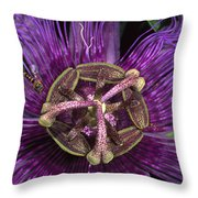 Bee On Passion Flower Brazil Throw Pillow by Pete Oxford
