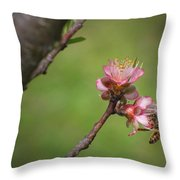Bee On Peach Bloom Throw Pillow
