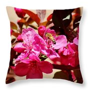 Bee On Pink Blossoms 031015aa Throw Pillow