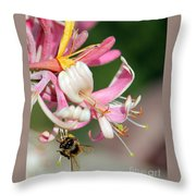 Bee On Pink Honeysuckle Throw Pillow