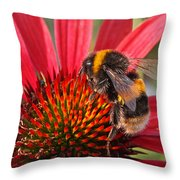 Bee On Red Coneflower 2 Throw Pillow