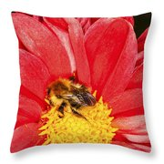 Bee On Red Dahlia Throw Pillow