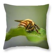 Bee Still Throw Pillow
