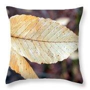 Beech Leaf In Winter Throw Pillow