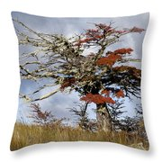 Beech Tree, Chile Throw Pillow
